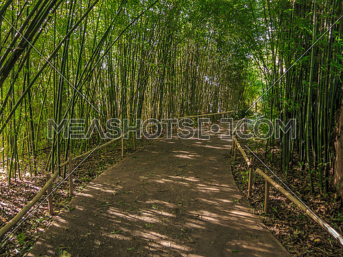 walk way shaded with bamboo shoots in a garden