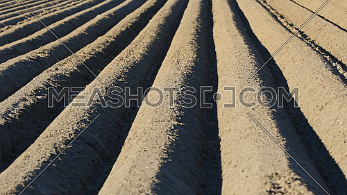 Plow lines in agricultural field