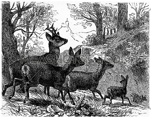 Deer, vintage engraved illustration. La Vie dans la nature, 1890.
