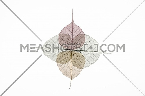 Colorful skeleton leaves flower composition isolated on white background
