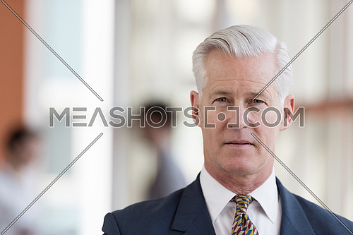 portrait of handsome senior business man with grey hait at modern bright office interior