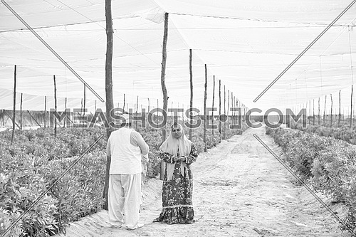 portrait of an elderly middle eastern farmers and traditional women to farm vegetables