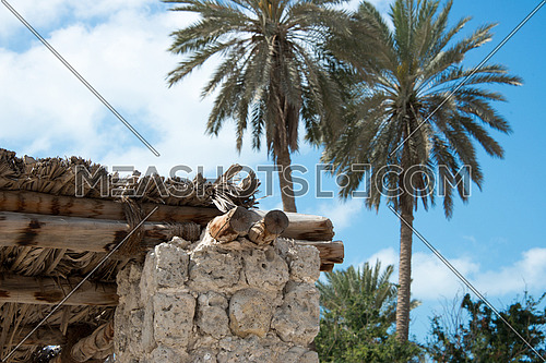 palm trees and old rural building in uae