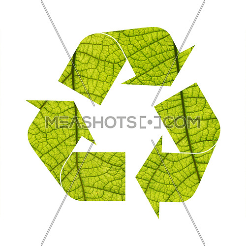 Illustration recycling symbol of green leaf veins foliage isolated on white background