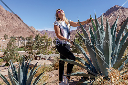 Long shot for female tourist standing cactus tree in  Sinai Mountain for wadi Freij at day.