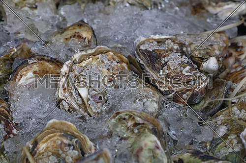 Close up fresh catch of raw oysters on ice at retail display of fisherman market, high angle view