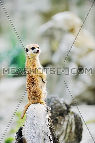 small animall in zoo