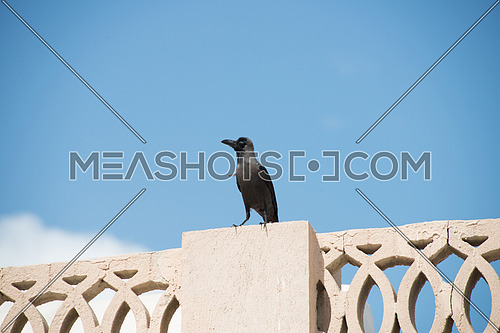A crow sitting on a wall
