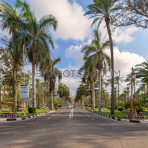 Asphalt road framed by trees and palm trees with partly cloudy sky in a morning summer day at Montana public park, Alexandria, Egypt