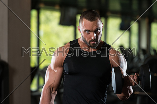 Big Man Standing Strong In The Gym And Wxercising Biceps With Dumbbells - Muscular Athletic Bodybuilder Fitness Model Exercise Bicep