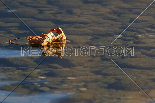 Dead leaf floating on the surface of a shallow lake with reflections and visible rocky bottom