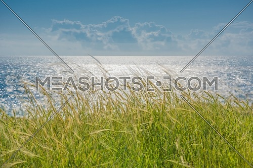 Long shot for Grass showing the coast of Paphos city in Cyprus at day