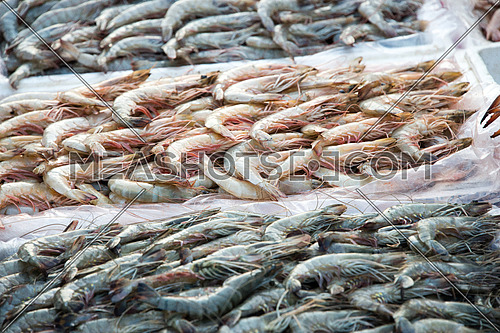 shrimps display in fish market dubai