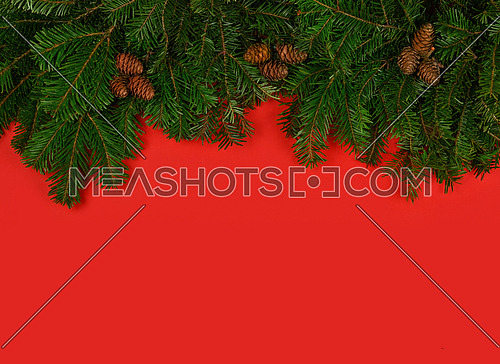 Close up fresh green spruce or pine Christmas tree branches with cones over red background with copy space
