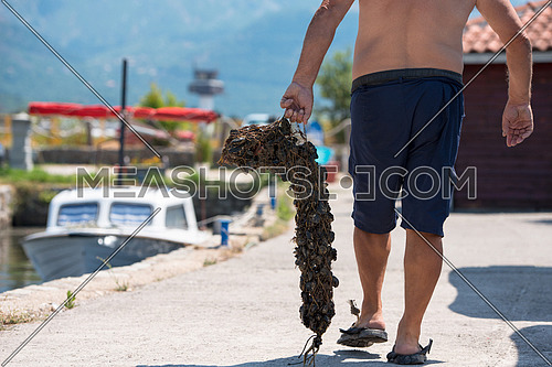 closeup picture of senior man carries a bag of fresh mussels