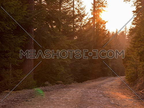 Forest landscape in spring sunset with filter in hipster vintage retro style