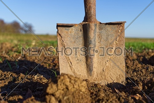rusty shovel stuck to the ground against a background of blue sky and spring fields. Spring work start concept