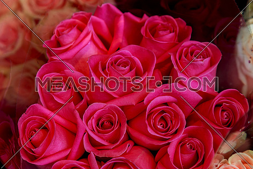 A bouquet of pink roses. Pink roses