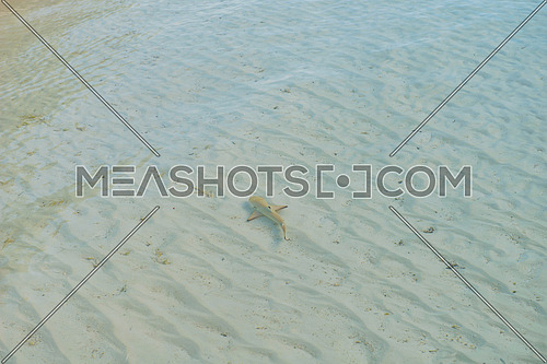 baby shark in ocean shalow water