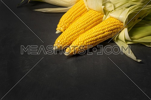 Ripe young sweet corn cob with leaves on dark concrete background, copy space.