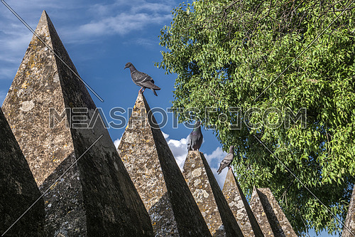 Almodovar del Rio, Cordoba, Spain - June 9, 2018: Several pigeons up castle cornices, It is a fortitude of Moslem origin, it was a Roman fort and the current building has definitely origin Berber, take in Almodovar of the Rio, Andalusia, Spain