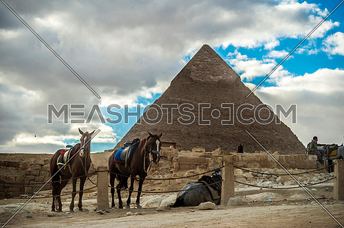 horses at the Pyramids of Giza - The greatness of the Egyptian civilization  أهرامات الجيزة عظمة الحضارة المصرية