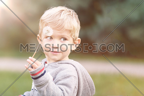 Cute little kid playing with dandelion in  the park, background blured and used split toning