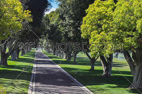 a small road in between a garden full of trees on each side