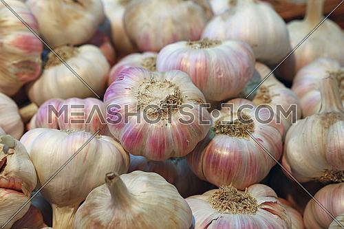 Fresh white and purple garlic bulbs cloves sale on retail food market stall display, close up, high angle view