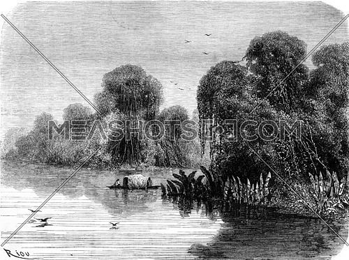 Tapichi mouth of the river, vintage engraved illustration. Le Tour du Monde, Travel Journal, (1865).