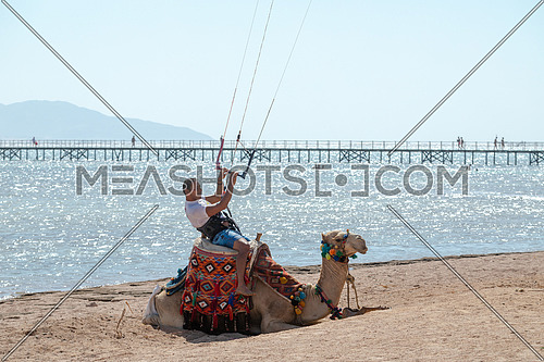 Kite Surfer riding a camel wearing the surfing set by Red Sea at day.
