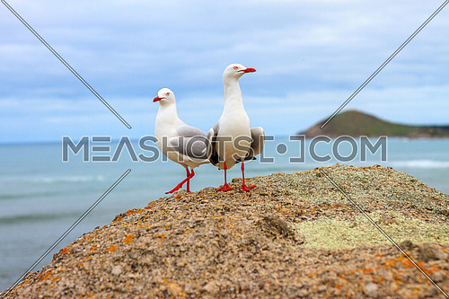Seagull couple on a rock by the ocean with blue sky