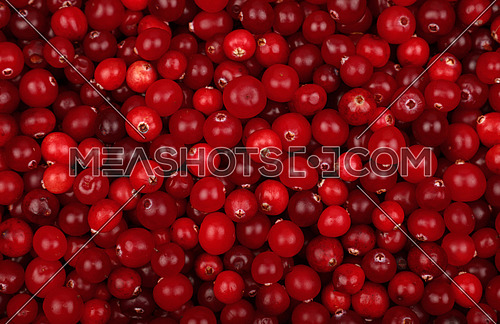 Fresh red ripe cranberries background close up, elevated top view