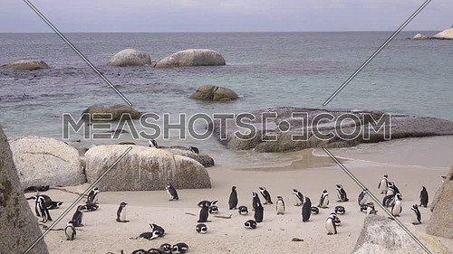 View of penguins standing around on Boulder Beach