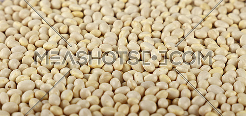 White frigole kidney beans close up pattern background, low angle view, selective focus