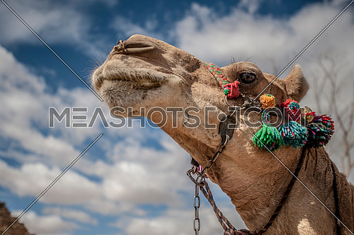 a low angle shot of a camel against blue sky and clouds