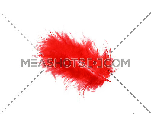 Close up one fluffy red down feather isolated on white background, elevated top view, directly above