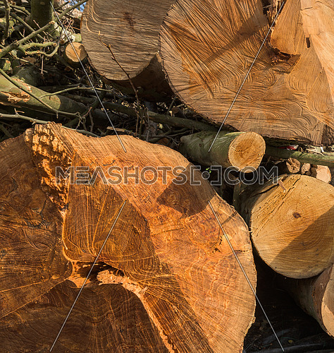 Trunks of tree close up