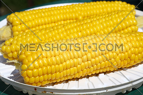 Three fresh boiled yellow corn cobs on white plastic plate for picnic, close up, low angle view