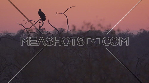 Scene of a lone scary vulture perched ominously at sunset