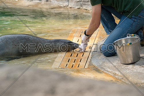 The Zookeeper working with a seal,