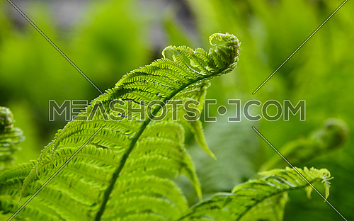 Close up fresh green fern frond and leaves over green background, low angle view