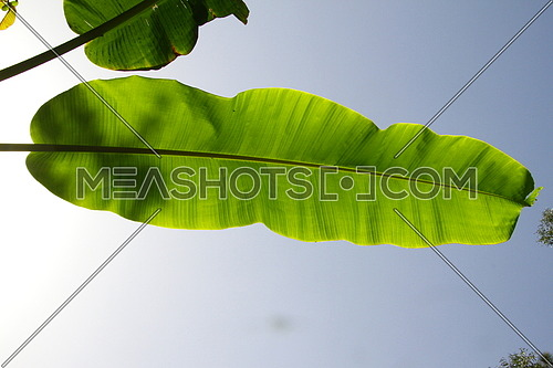green tree leave , blue sky in the background , with sun flare
