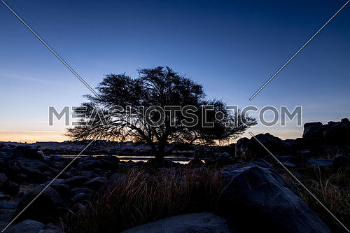 Long shot for sun rises on giant tree in aswan