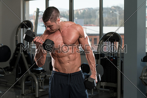 Young Physically Bodybuilder Working Out Biceps - Dumbbell Concentration Curls