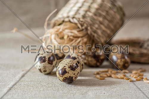 Quail eggs and wheat  on grey background