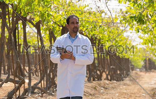 agriculture engineer in grapes field