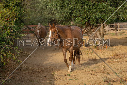 Horses In a corral at the ranch
