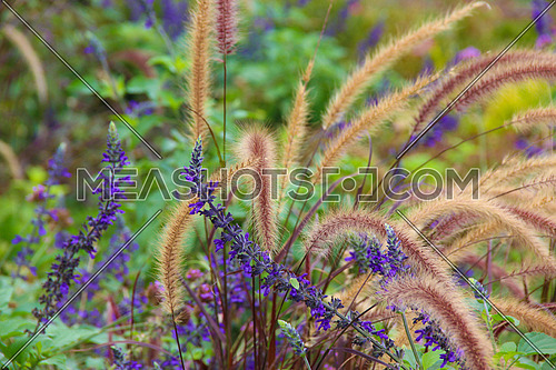 a closeup for a plants and flowers in a garden