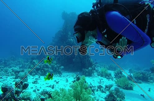 Follow shot for scuba divers and clown fish underwater at The Red Sea